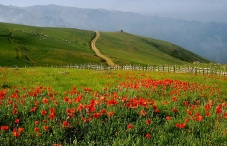 Gilan, Iran - Green valleys - Flowers