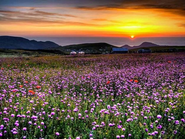 Gilan, Iran - Green valleys - Flowers in Talesh [Click to enlarge]