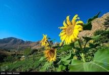 Fars, Iran - Sepidan County - Abshare Margoon (waterfall) near Sepidan_09