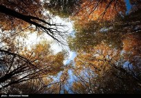 Golestan, Iran - Autumn 04