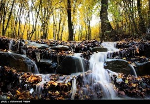 Golestan, Iran - Autumn 06