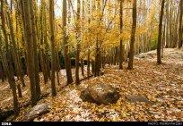 Hamedan, Iran - Autumn in Hamedan 04