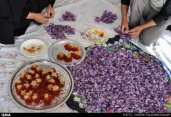 Iranian Saffron Farm 27