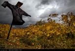 Kermanshah, Iran - Kermanshah, Kambadn in Autumn 00