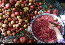 Kermanshah, Iran - Paveh, Pomegranate Harvest 2014 05