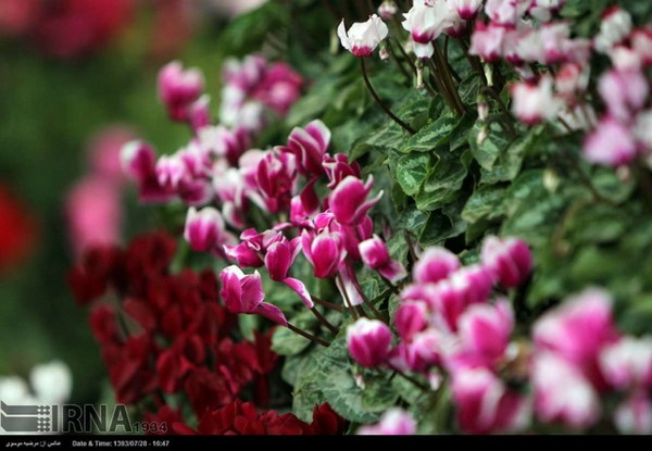 Tehran - 6th Flowers and Plants Exhibition 07