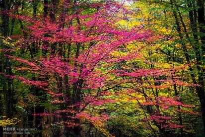 Golestan, Iran - Gorgan, Alangdare Forest 00