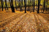 Golestan, Iran - Gorgan, Alangdare Forest 06