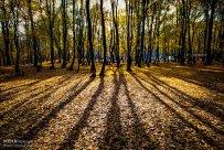 Golestan, Iran - Gorgan, Alangdare Forest 15