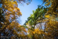 Golestan, Iran - Gorgan, Alangdare Forest 17