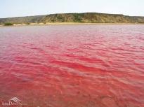 Sistan and Baluchistan, Iran - Chabahar, Lipar's wetland 03