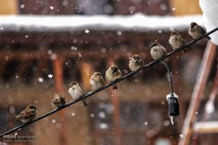 Gilan Province, Iran - Masuleh, Snow 12