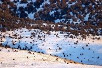 Iran Chahar Bagh Alborz Mountains Snow 8