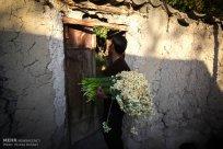 Iran - Narcissus Harvest 3