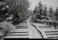 Snowfall in Tabriz Iran 11
