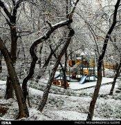 Iran, Tehran, Park, Winter snow 00