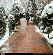 Iran, Tehran, Park, Winter snow 05