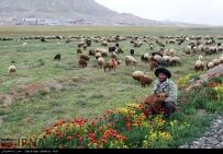 East Azerbaijan, Iran - Arasbaran region 16