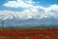 East Azerbaijan, Iran - Arasbaran region 2