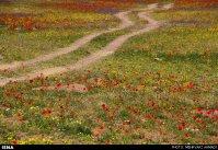 East Azerbaijan, Iran - Arasbaran region 23