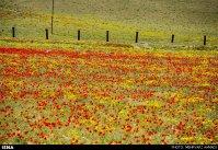 East Azerbaijan, Iran - Arasbaran region 26