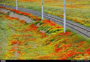 East Azerbaijan, Iran - Arasbaran region 27