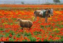 East Azerbaijan, Iran - Arasbaran region 29