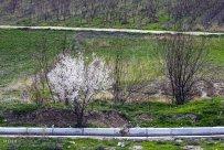 North Khorasan, Iran – Bojnourd in spring 04