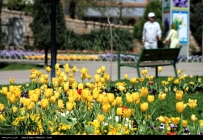 Razavi Khorasan, Iran - Mashhad, Bulbous Flowers Festival 03