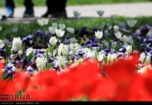 Razavi Khorasan, Iran - Mashhad, Bulbous Flowers Festival 10