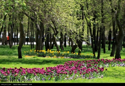 Razavi Khorasan, Iran - Mashhad, Bulbous Flowers Festival 13
