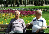 Razavi Khorasan, Iran - Mashhad, Bulbous Flowers Festival 14