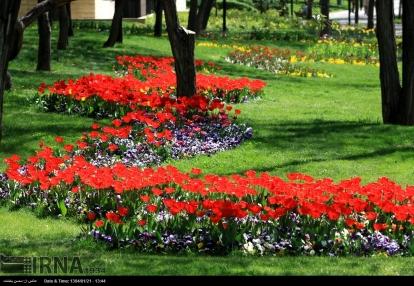 Razavi Khorasan, Iran - Mashhad, Bulbous Flowers Festival 17