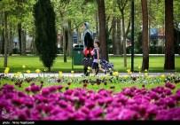 Razavi Khorasan, Iran - Mashhad, Bulbous Flowers Festival 25