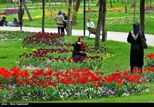 Razavi Khorasan, Iran - Mashhad, Bulbous Flowers Festival 27
