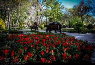 Tehran, Iran - Bagh-e Irani Park 19