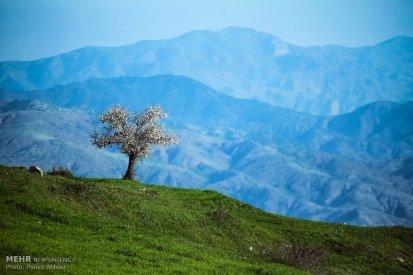 East Azerbaijan, Iran - Kaleybar in spring 15