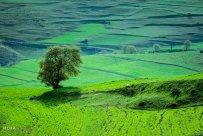 East Azerbaijan, Iran - Kaleybar in spring 18