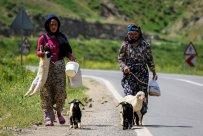 East Azerbaijan, Iran - Kaleybar in spring 19
