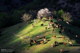 East Azerbaijan, Iran - Kaleybar in spring 21