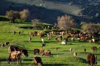 East Azerbaijan, Iran - Kaleybar in spring 4