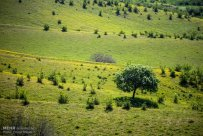 East Azerbaijan, Iran - Kaleybar in spring 5