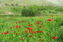 Isfahan, Iran - Fereydunshahr in Spring 10