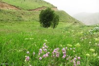 Isfahan, Iran - Fereydunshahr in Spring 8
