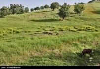 Iran Chahar Mahal Province -Spring in Koohrang 9