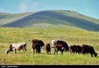 East Azerbaijan, Iran - Arasbaran 107