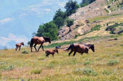 Golestan, Iran - Ramian County, Ghale Maran 2