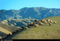 Golestan, Iran - Turkmen Sahra (Plain of Turkmens) 21