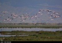 Iran's Fars Province Kamjan Shiraz 008