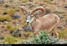 Iran's Fars Province Kamjan Shiraz Animals 001